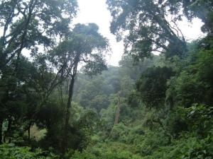 La selva virgen tropical representa la máxima expresión de la Naturaleza