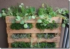 Jardín vertical con un palé, que puedes usar para hierbas aromáticas o como huerto de lechugas, zanahorias...