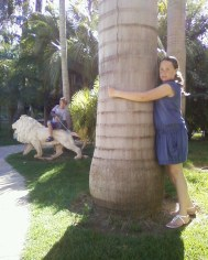 Impresionantes palmeras en el Jardín Botánico Molino de Inca de Torremolinos, Málaga