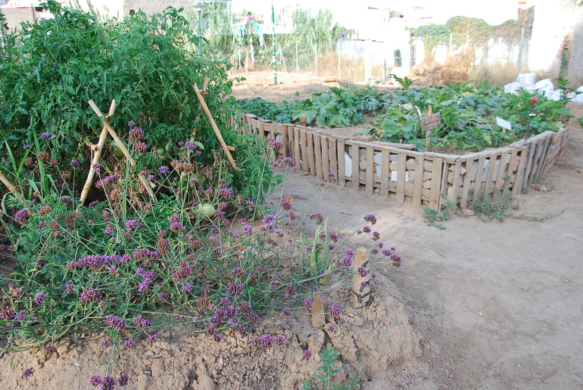 El caminito el xito de los huertos urbanos en m laga - Huerto urbano malaga ...
