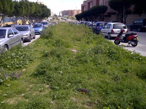 Mediana en Málaga, con mucha vegetación salvaje florida.