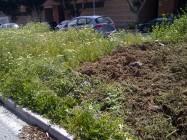 Mediana en Málaga, siendo arrasada, donde se aprecia las floridas plantas que había, y cómo son desahuciadas de su hogar (2-4-2013).