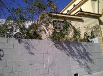 3. Planta de la familia del tabaco, Nicotiana glauca, de más de 3 metros, planta invasora que suele colonizar en Málaga todos los solares, y también espacios naturales.