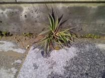8. Más individuos botánicos prosperando en una grieta.
