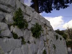 50. Más biodiversidad en la misma pared encalada.