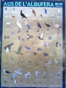 Aves de la Albufera (Valencia, España)