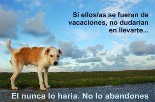 7fcb1-perros_abandonados_12