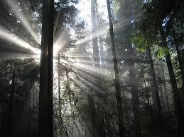 12. Luz entre árboles