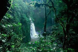 8. Selva amazónica