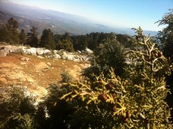 Sabina de la Sierra de las Nieves, y vista desde el Tajo de la Caína (Yunquera, Málaga, España)