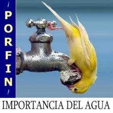 Pájaro bebiendo agua en un grifo
