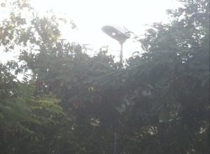 Málaga: Otro ejemplo más de farola situada sobre los árboles, cuando lo que se quiere iluminar está debajo de ellos.