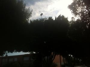 Málaga: Una farola por encima de los árboles ilumina sus copas y no el suelo. Una forma clara de perder dinero.