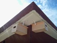 Cajas nido para golondrinas, vencejos o aviones comunes.