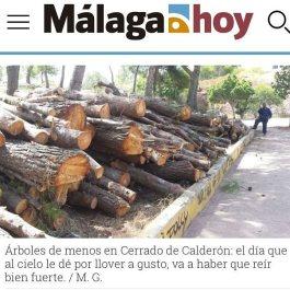 El PP de Málaga no quiere árboles en la ciudad