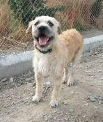 Si quieres adoptar a Heiki (terrier) o a otro, pulsa en la foto.