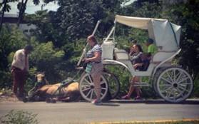 Caballo de turistas desmayado por el maltrato animal