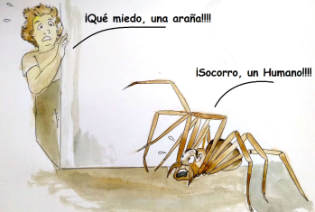 Una araña y un humano se encuentran. ¿Quién se asusta más?